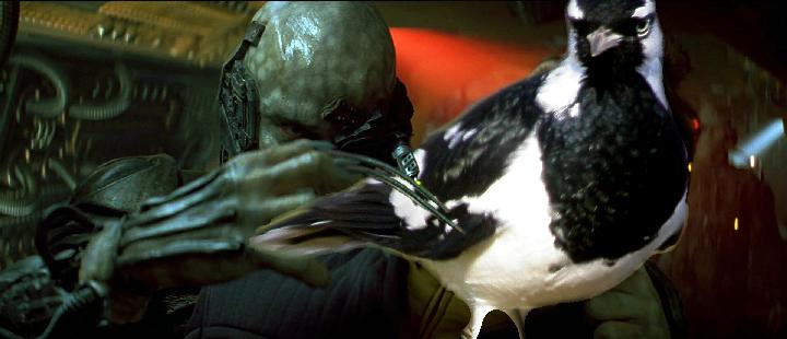 Magpie of Borg