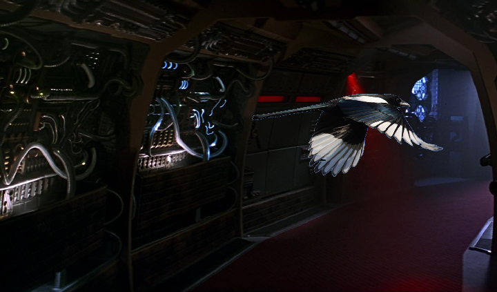 Magpie of Borg